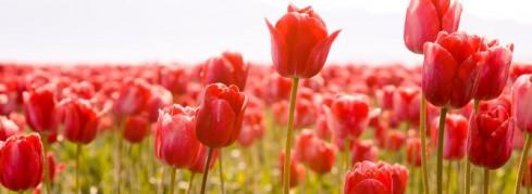 """Frühlingsgefühle"" in der GenussSchmiede"